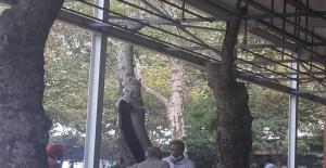 CHP'li Avni Kurt, Çınaraltı Çay Bahçesi üzerinden iktidara ve Çınarcık Belediye Başkanı Numan Soyer'e yüklendi!